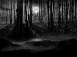 forêt nuit